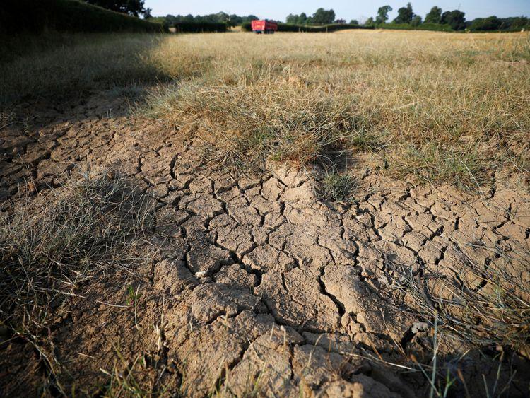Cracks in a farmer's field near Altringham in Cheshire